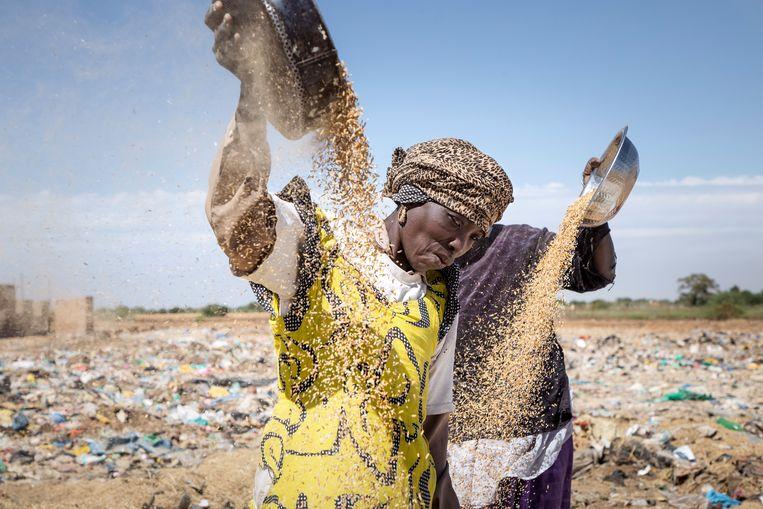 Senegalese vrouwen zeven rijstafval op zoek naar bruikbare korrels, om mee te koken of te verkopen, november 2017. Beeld Sven Torfinn
