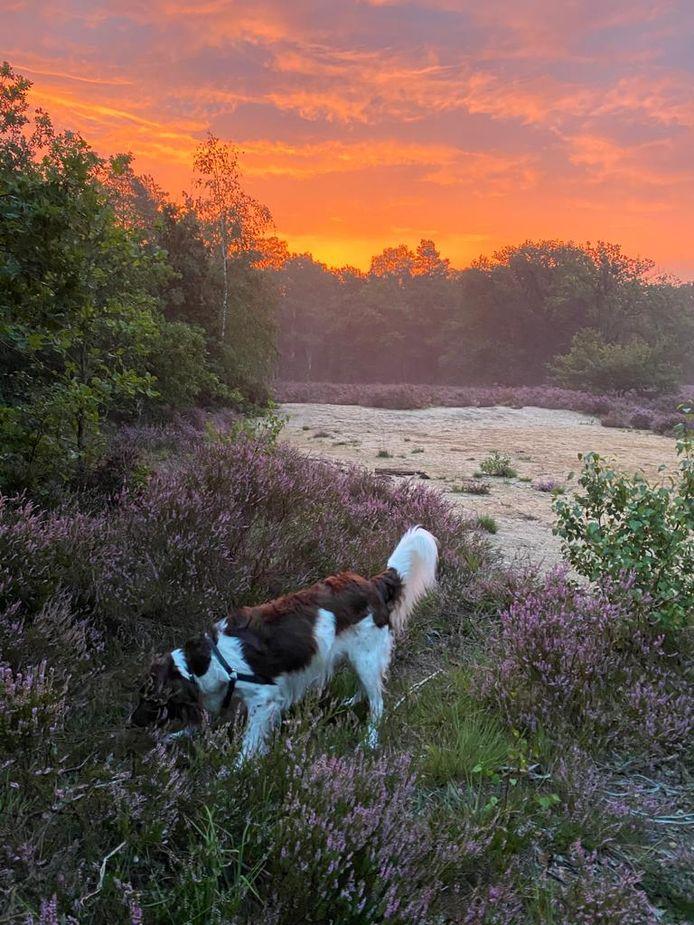 Karin Jansen uit Nijmegen fotografeerde haar hond Bram bij zonsopgang in Heumensoord in Nijmegen.