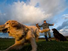 Vangt Rhenense hondenschool weer bot?