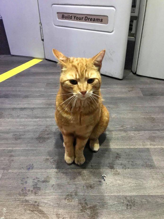 Stationskat Sunny schuilde vrijdagavond tegen de regen in de stadsbus van Jeroen Wuestman. In uitstappen had Sunny geen zin, Wuestman deed meerdere pogingen om de kat weer zijn bus uit te krijgen: ,,Ik vertrok uiteindelijk een paar minuten te laat.''