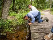 Ook Staatsbosbeheer lijkt verantwoordelijk voor vervuiling Het Springendal
