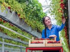 Eten rechtstreeks van de boer: Hagenaars kunnen er binnenkort voor kiezen