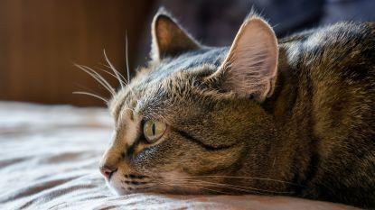 Texaans gezin vindt kat terug die meer dan tien jaar geleden thuis verdween