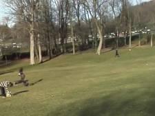 Un jeune enfant enlevé par un aigle royal au Canada