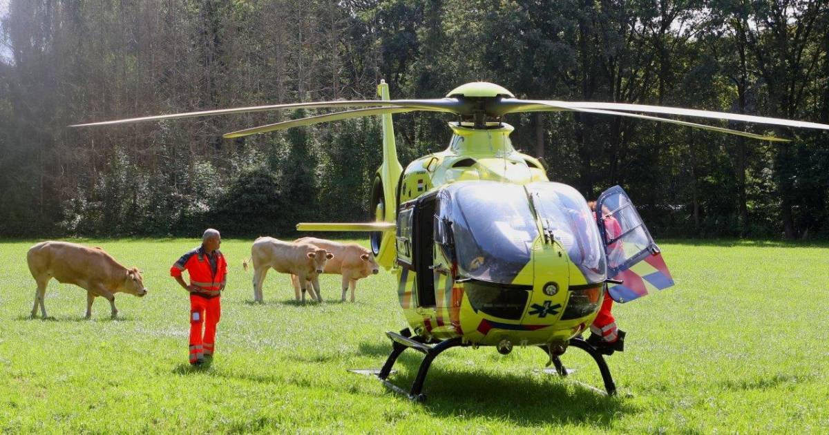 Wielrenner gewond bij ongeval in Cromvoirt, traumahelikopter landt tussen de koeien.