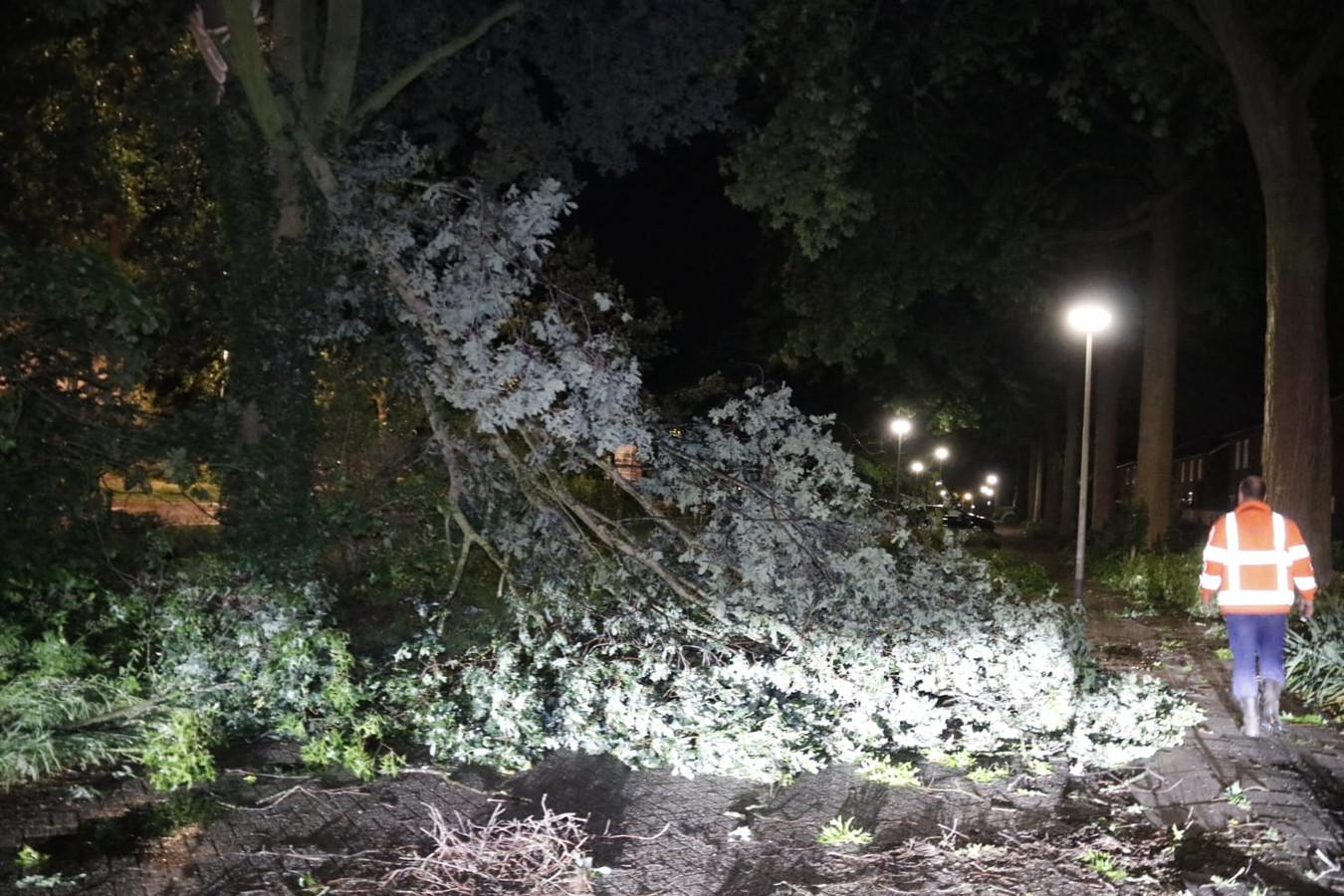 Omgevallen boom in Gennep