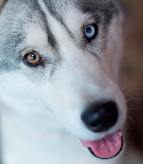 New Yorkse hond duikt na 18 maanden op in Florida