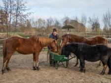 Pony-opvang De Shetterie vlucht in galop vanuit Ermelo naar Epe