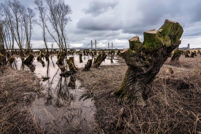 Het ooibos in de uiterwaard bij Waardenbrug