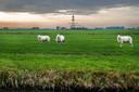 In de polder Rijnenburg moeten we wat Han Lörzing betreft zo snel mogelijk een paar duizend woningen bouwen.