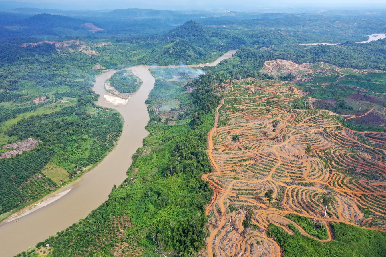 Ontbossing voor palmolieplantages in Indonesië.