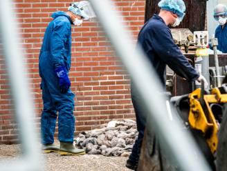 Eind volgende week geen nertsen meer in Nederland