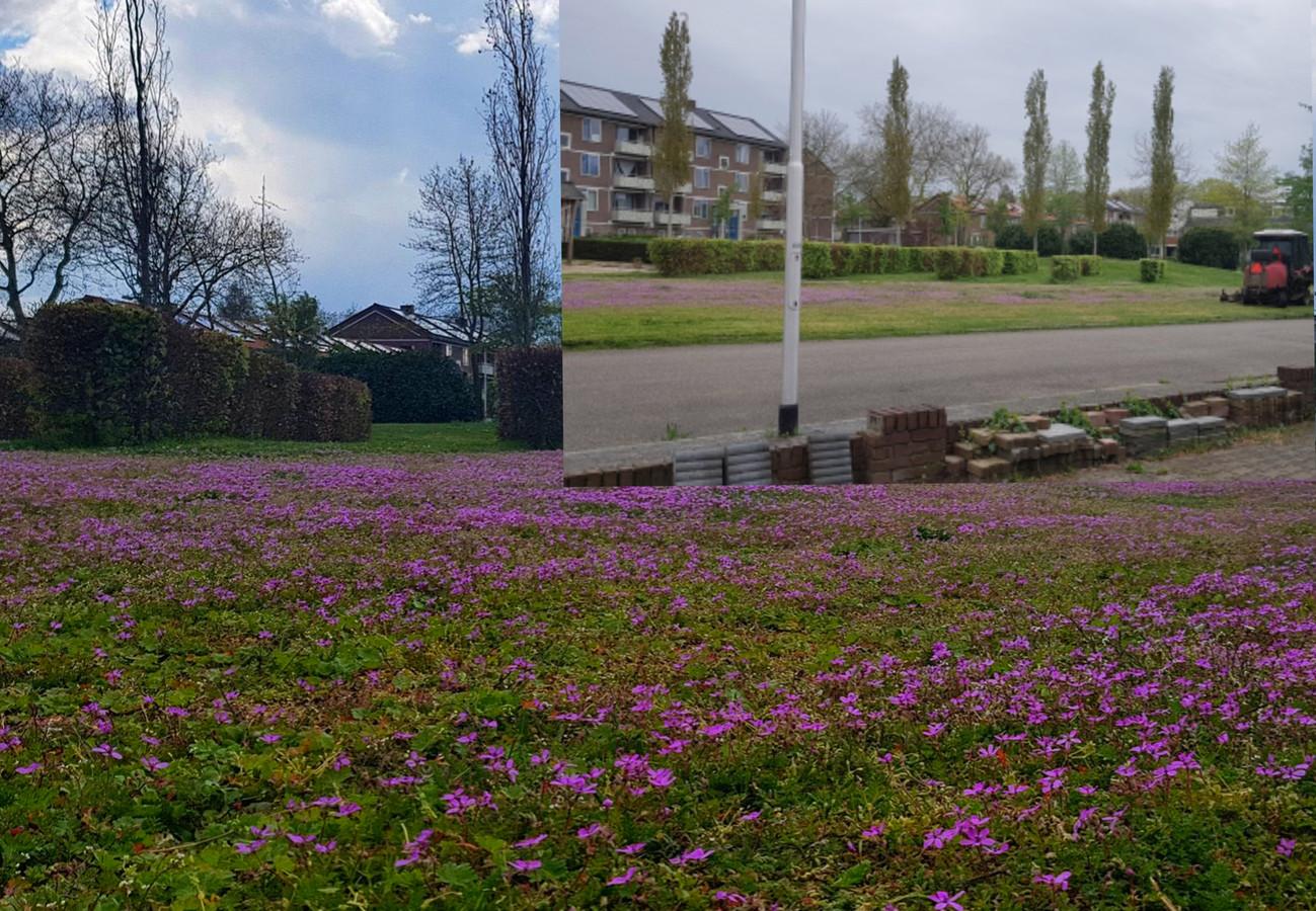 Grote foto: het veld met bloeiende bloemen. Inzet: de grasmaaier maakt er een eind aan.