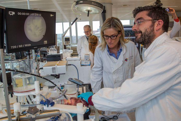 Bij medisch technologisch bedrijf Life Tec kunnen chirurgen vaardigheden oefenen op een kloppend varkenshart.