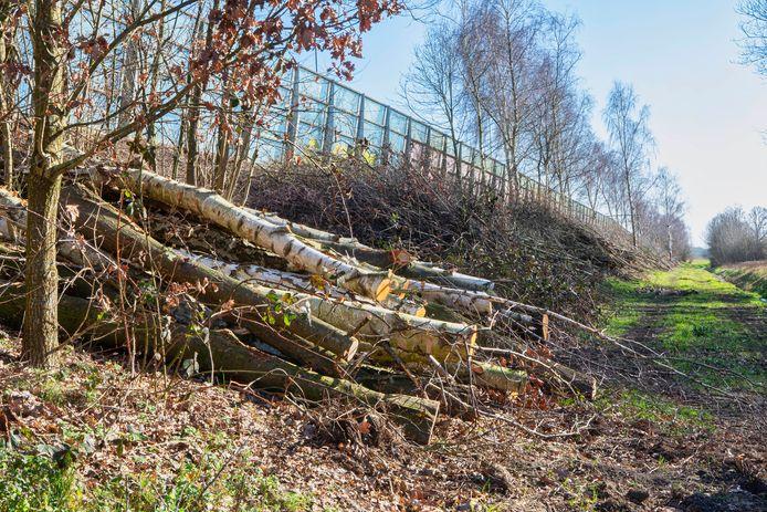 De omstreden bomenkap op het talud van de A16 in Breda, aan de kant van de Rijsbergseweg.