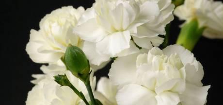 Zeeuwse veteraan genomineerd voor Witte Anjer Prijs