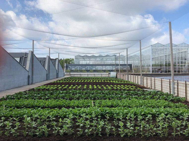 De Slachthuis Boerderij levert alleen aan lokale restaurants en supermarkten om ecologische voetafdruk klein te houden. Beeld BELGAONTHESPOT
