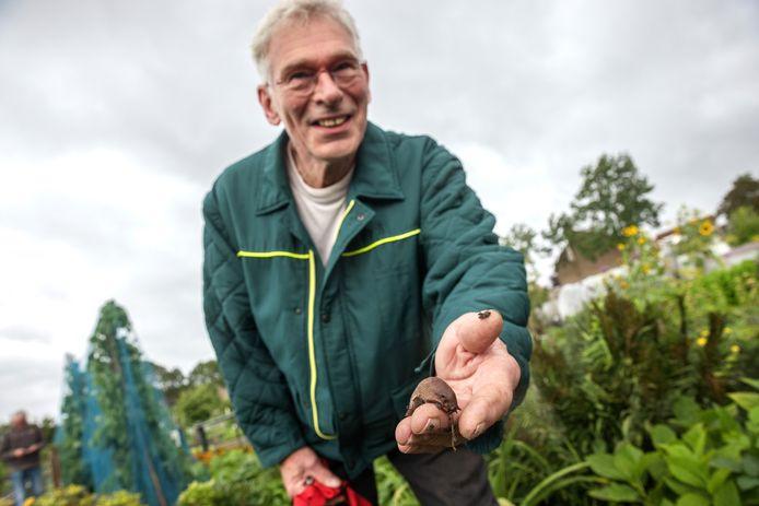 Slakken zijn er dit jaar in overvloed, ziet Christ Dietvorst van de Algemene Vereniging Voor Volkstuinders Bommesee.