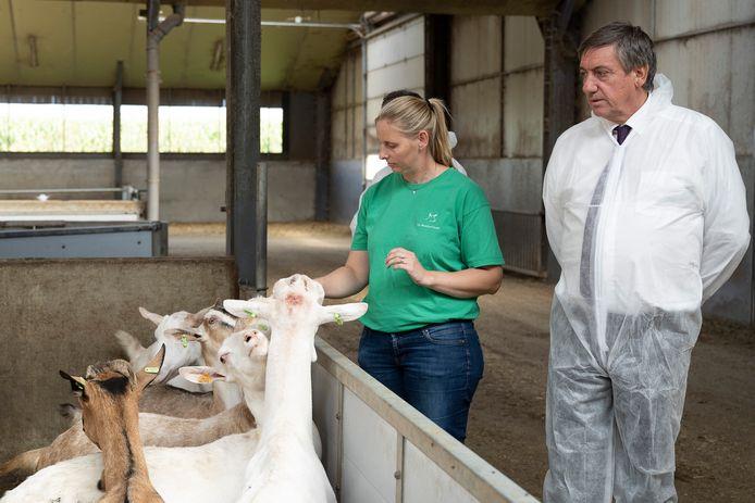De melkgeitenboerderij van Kurt Tilburgs en Liesje Van Loon