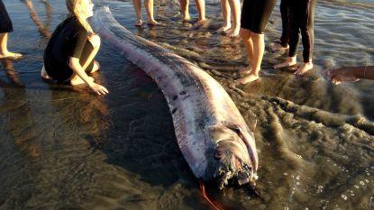 Vrees voor natuurramp in Japan na waarnemingen van zeldzame diepzeevis