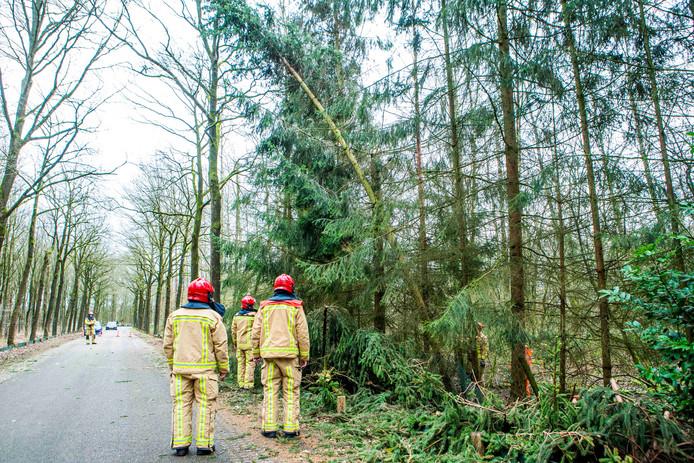 Stormschade bij verschillende bomen in Mierlo.