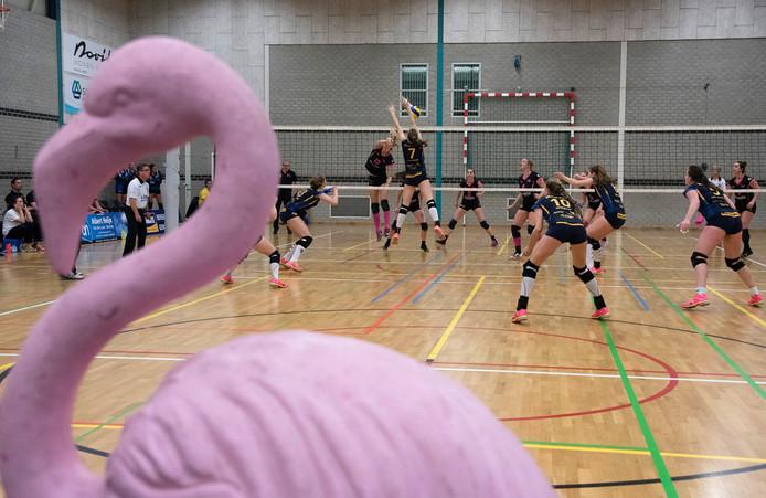 Flamingo's in actie op archiefbeeld.