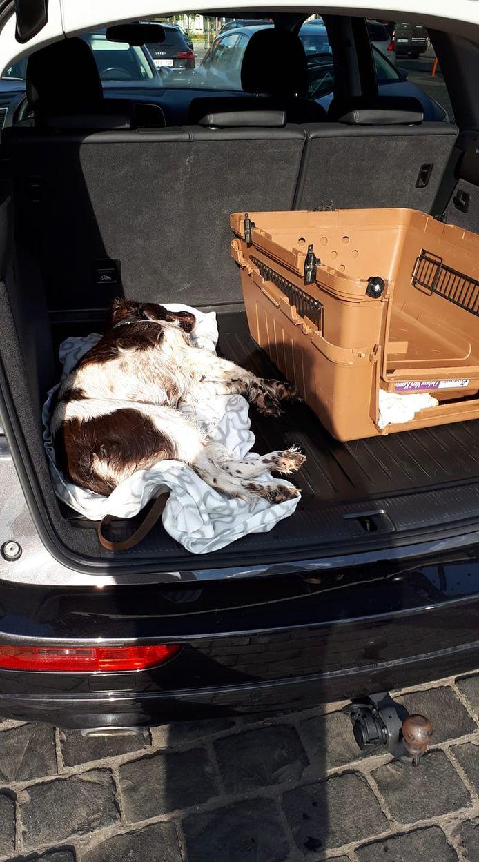 De hond overleed in de kofferbak van de wagen.