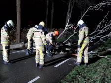 Onstuimig weer zorgt voor omgewaaide bomen en schade in Oost-Nederland