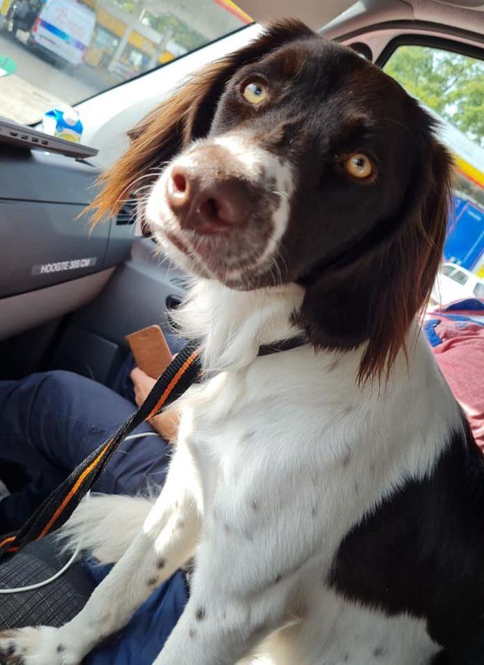 De door Ton gevonden hond.