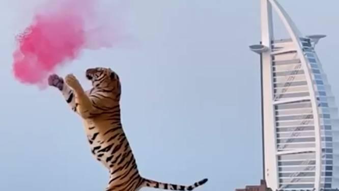 Ophef over 'gender reveal' met tijger In Dubai