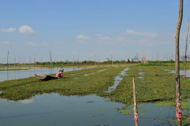 Het Boeung Tompun, een meer van 2500 hectare, wordt sinds 2011 stukje bij beetje dichtgegooid.  Beeld ate hoekstra
