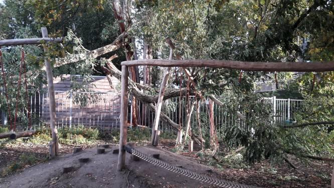 Nieuw groen schoolplein Princenhage vernield door storm: 'Gelukkig waren er geen kinderen'
