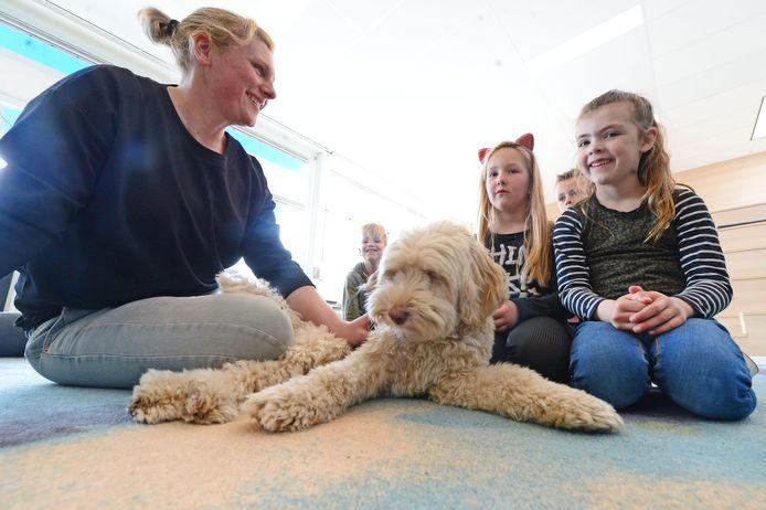 OBS De Boomhut in Goor heeft een schoolhond: Zapp de labradoodle. Links baasje Inge met Zapp en een aantal leerlingen.