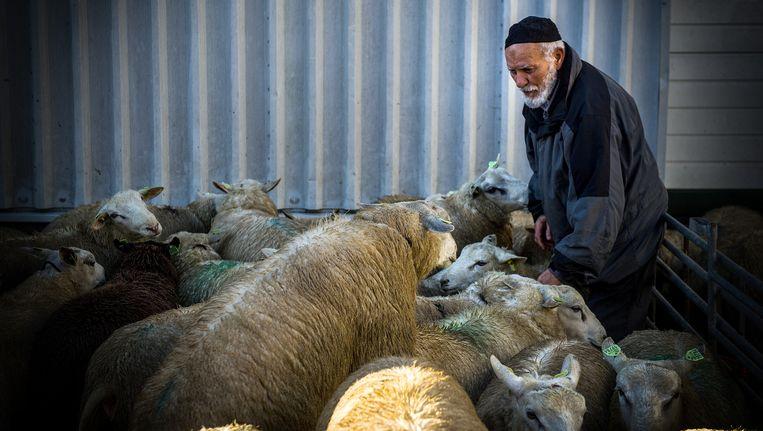 Een man zoekt schapen uit voor het Offerfeest. Beeld anp