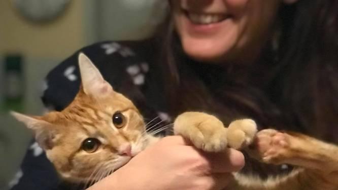 "Katje Oscar sterft na lijdensweg van vijf dagen: ""Snelheidsduivels terroriseren de buurt"""