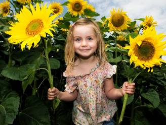 Gezinsbond stelt kinderen en jongeren originele uitdaging: kweek de hoogste zonnebloem en win prijzen