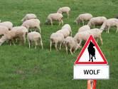 Provincie Brabant wil wolf buiten de deur houden