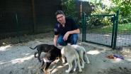Happy Doggy krijgt schadevergoeding van Vlaanderen, maar ziet Dogs & Co geschrapt van witte lijst