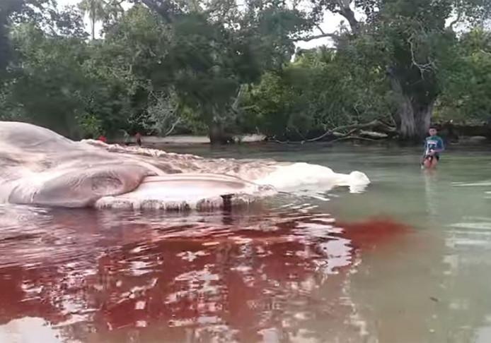 Een walvis is aangespoeld op het Indonesische eiland Ceram.