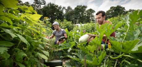Een volkstuin kost heel veel tijd, maar levert meer op dan groenten alleen: 'Hier stop je je zorgen onder de grond'