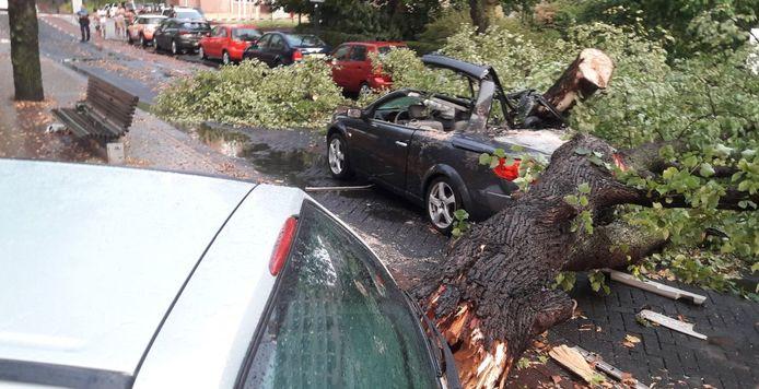 De boom knakte als een luciferhoutje. Eén persoon overleed.