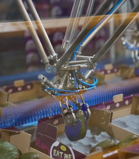 Robot pakt bij Selo Hengelo avocado met 'fluwelen handschoentjes' in