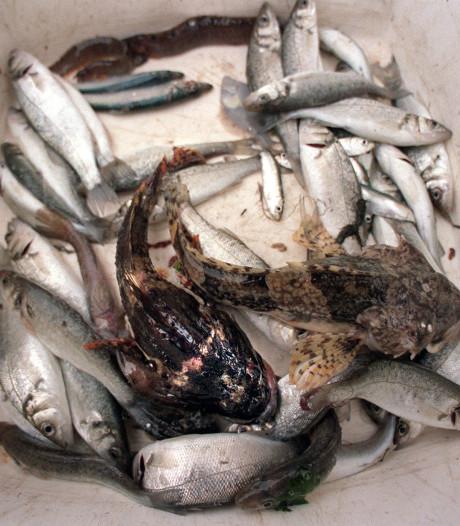 Duikers tellen minder 'typische vissen' in de Oosterschelde