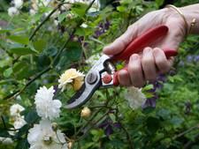 Werkbegeleiding met tuincoach