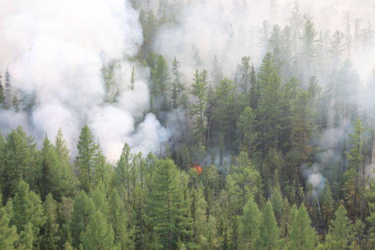 Een bosbrand in de Siberische regio Krasnojarsk.  Beeld AP