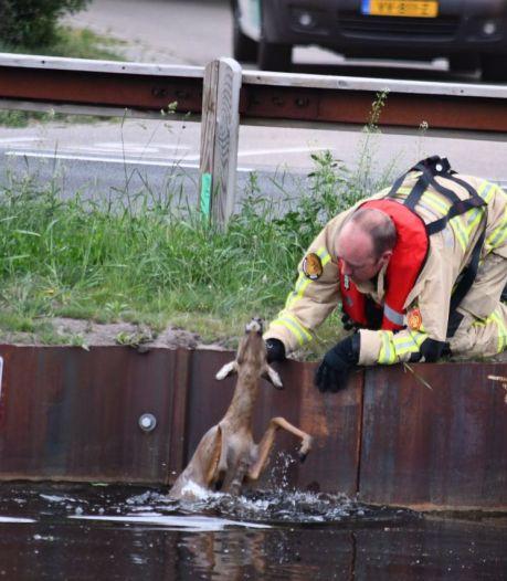 Ree gered van de verdrinkingsdood in Daarlerveen