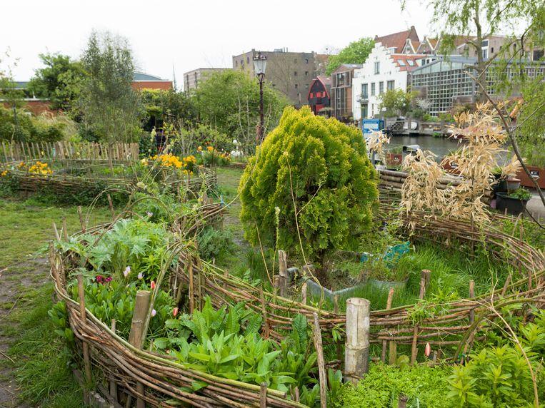 Een van de tuinen aan de Bickersgracht. Beeld Ivo van der Bent