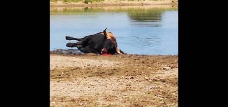 Nieuwsoverzicht | Pijnlijke fouten bij doodschieten Taurossen - Brabantse wint een ton met radiospel