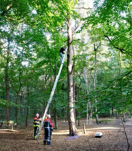 Man durft niet meer uit 8 meter hoge boom in Rijen en wordt gered door de brandweer