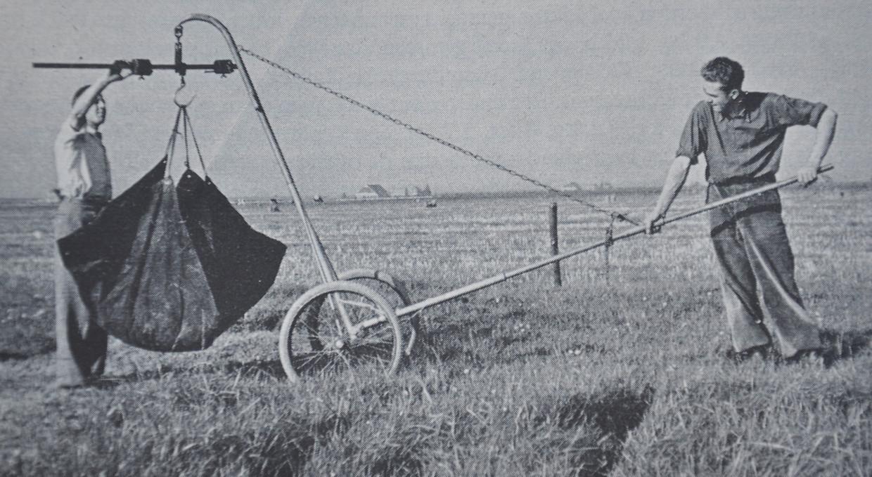 Het wegen van de biomassa op het Ossekampen Graslandexperiment bij Wageningen in 1958, het jaar van de aanleg. Beeld WUR